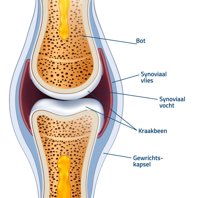flexofytol-articulations-schema-nl