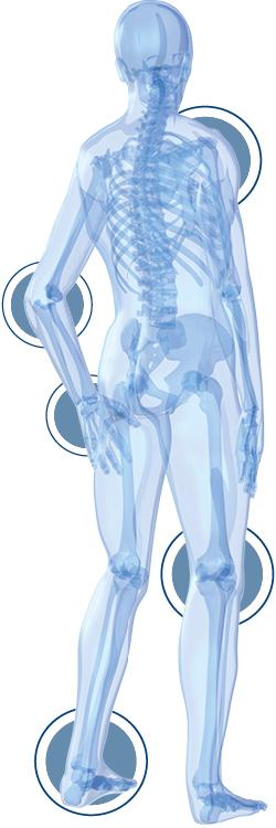 FLEXOFYTOL-articulations-squelette